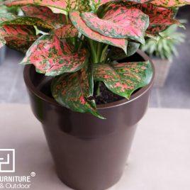 Chậu trồng cây tự dưỡng sơn tròn -ST14